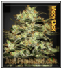 Moby Dick Just Feminized Mix & Match Seeds